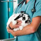 clinica veterinária para coelhos