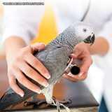 clinica veterinária para pássaros