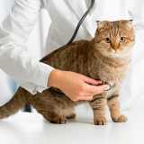 contato de clinica veterinária de cães e gatos Higienópolis