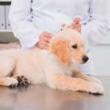 contato de clinica veterinária de exames Jardins