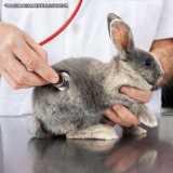 contato de clinica veterinária para coelhos Pinheiros