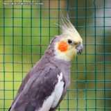 contato de clinica veterinária para pássaros Faria Lima
