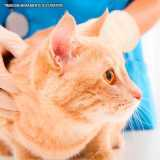 dermatologia veterinaria gatos orçar Tamboré