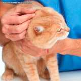 dermatologia veterinaria gatos Berrini