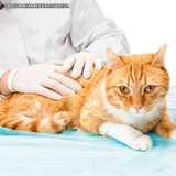 veterinario dermatologia
