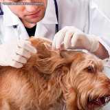 veterinario especializado em dermatologia