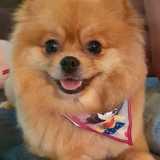 empresa que faz tosa em cães Itaim Bibi