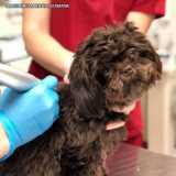 exame de clinica veterinaria dermatologia Alto de Pinheiros