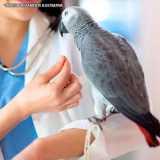 exame de dermatologia veterinária animais silvestres Cidade Monções