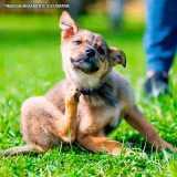 exame de dermatologia veterinaria sarna Jardim Europa