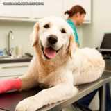 exame ortopédico veterinário melhor preço Alphaville
