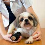 exame ortopédico veterinário Cidade Monções