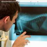 exame radiográfico veterinário Alto de Pinheiros