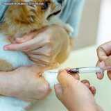 exame de sangue veterinário