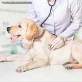 exame físico veterinário