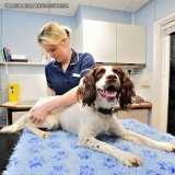 fisioterapia veterinária cachorro Alto de Pinheiros