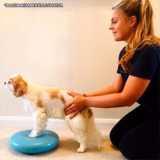 fisioterapia veterinária animal