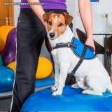 fisioterapia veterinária para cachorro valores Alphaville