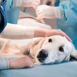 onde encontro clinica veterinária de exames Cidade Monções