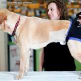 onde encontro clinica veterinária fisioterapia Vila Mariana