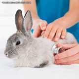 onde encontro clinica veterinária para coelhos Cidade Monções