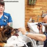 onde encontro endoscopia para cachorro Cidade Monções