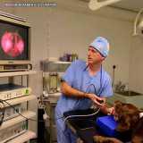 onde encontro exame de endoscopia para cachorro Jardim América