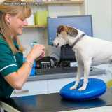 onde encontro fisioterapia veterinária animal Higienópolis