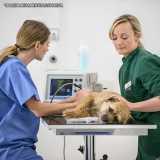 onde faz cirurgia veterinária de cães Cidade Monções