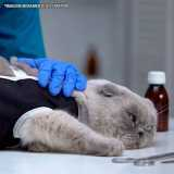 onde faz cirurgia veterinária mastectomia Santana
