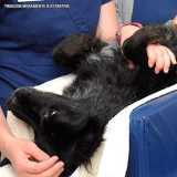 onde faz ultrassom para cachorro Tamboré