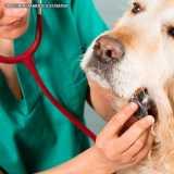 onde faz ultrassom para latido de cachorro Pinheiros