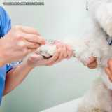 onde fazer exame de sangue veterinário Pinheiros