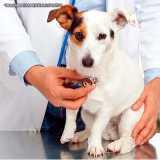 onde tem ultrassom para latido de cachorro Consolação