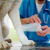 ortopedia para cachorro