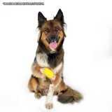 ortopedia para cachorro Jardins