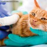 ortopedia para gatos Santana