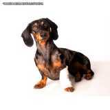 ortopedia pequenos animais valor Perdizes