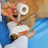 ortopedia veterinária valor Santana