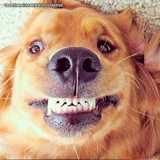 procuro por ultrassom veterinário dentário Jardim Europa