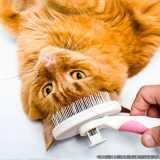 tosa em gatos orçamento Pacaembu