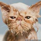 tosa em gatos Berrini