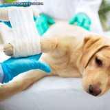 tratamento de ortopedia para cachorro Vila Mariana