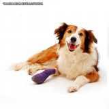 tratamento de ortopedia veterinária Santana