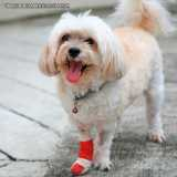 tratamento de ortopedista de cachorro Berrini