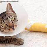 tratamento de ortopedista de gatos Tamboré