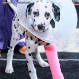 tratamento de ortopedista para animal Santana