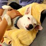 ultrassom de cachorro Bela Cintra