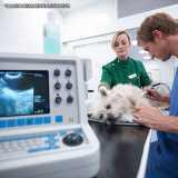 ultrassom de cachorro