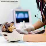 ultrassom para cães